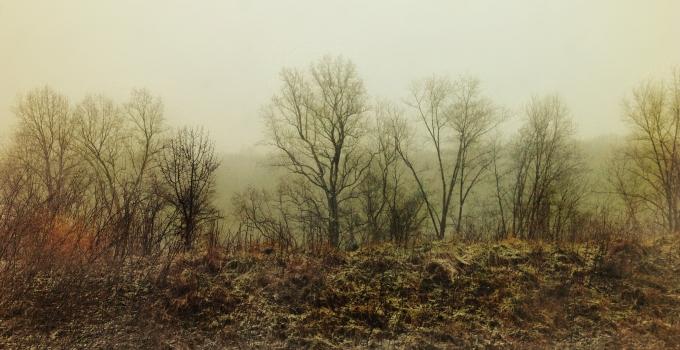 Winter Forest Jacque Hammond