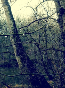 dewdrops hanging like jewels