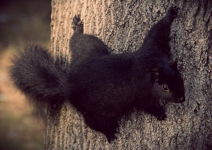 Stealthy Squirrel