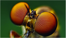 fly eyes biomimicry