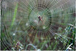 spider silk biomimicry inspiring non-toxic alternative to kevalr