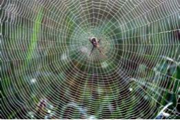 spider silk biomimicry inspiring non-toxic alternative to kevalr