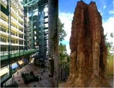 termite mounds inspired building