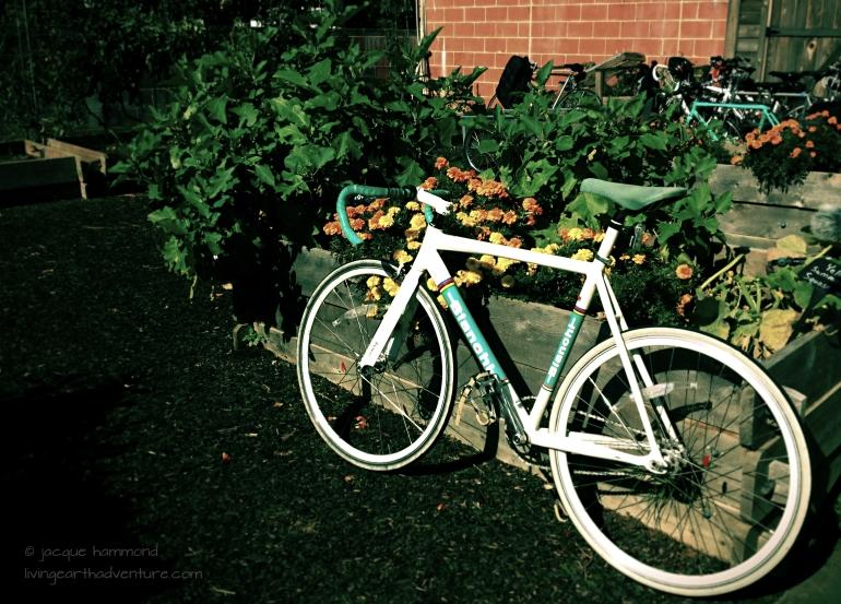 urban garden tour
