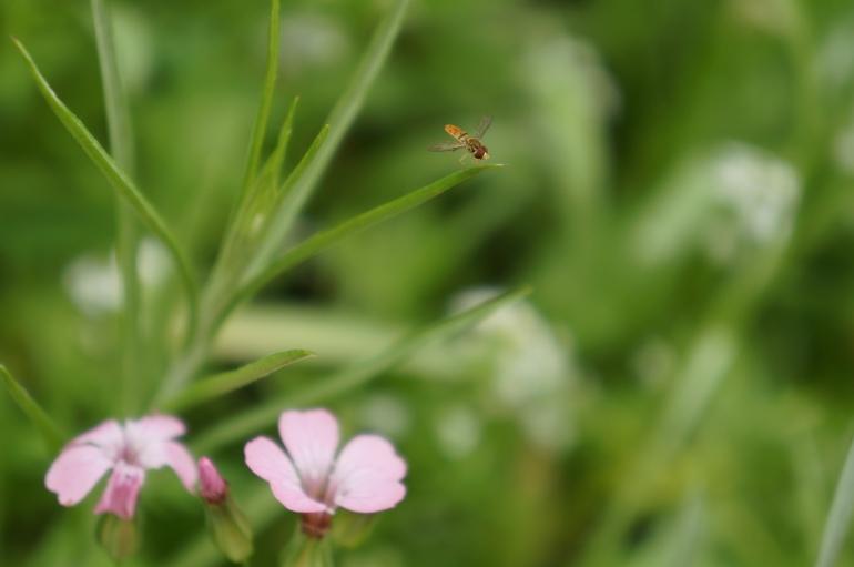 flying friend on wildflower leaves