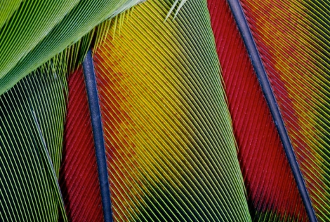 songbird feather