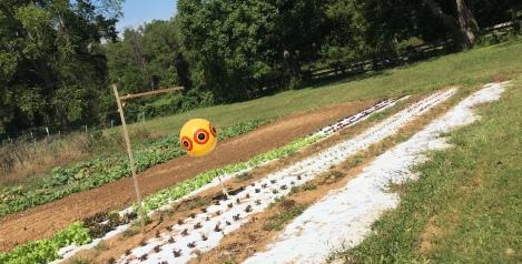 Karma Farm Crops