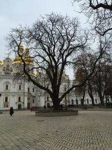 Babushka in Square