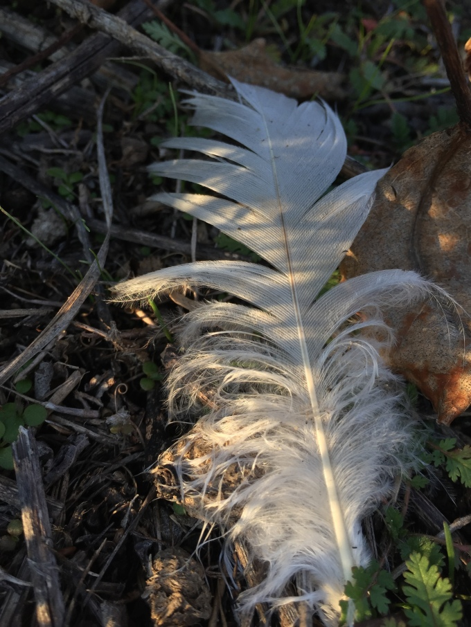 white feather geese